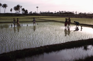 Fairtrade Farmers for a fair wage