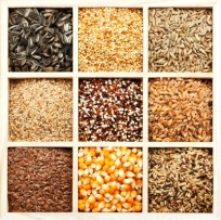 There are many alternatives to wheat
